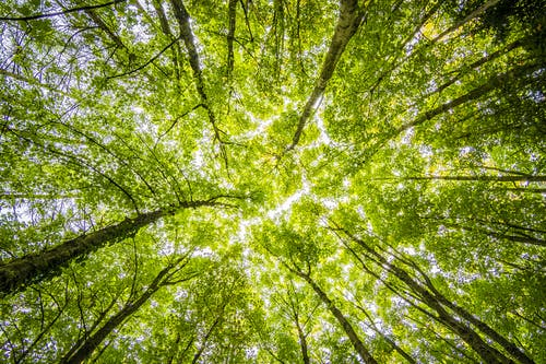 Natural Forest Regrowth Could Combat Climate Change